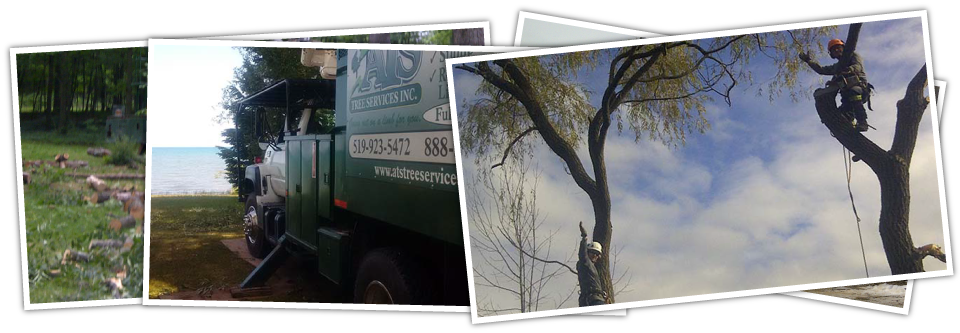 ATS TREE SERVICES INC