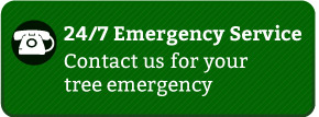 24/7 Emergency Service - Contact us for your tree emergency